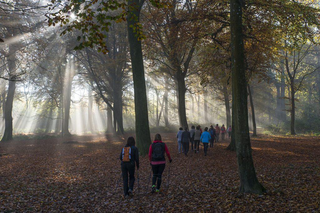 Marche Nordique en Forêt de Guînes - crédit OTPO (3)
