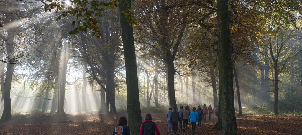 Guines Forêt | OTPO