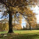 Le Manoir de Bois-en-Ardres