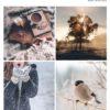 Magazine Pays d'Opale 2020|2021